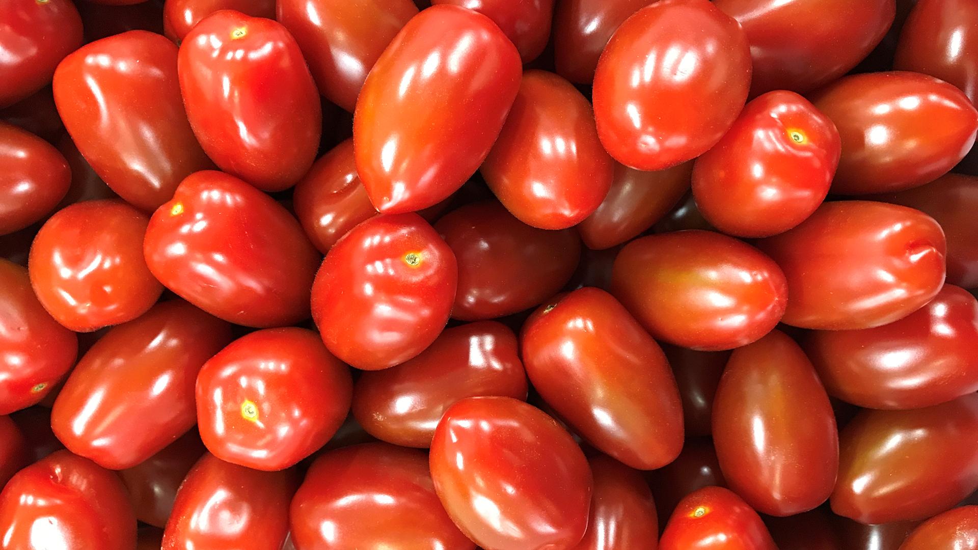 アートテンミニトマト